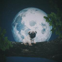 freetoedit puglove moonlightdreams plantbased