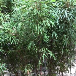 plants bamboo pavement rocks green freetoedit
