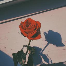 freetoedit aesthetic hopeyoulikeit flowerpower