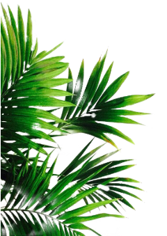 feuillage feuille feuilles nature green freetoedit