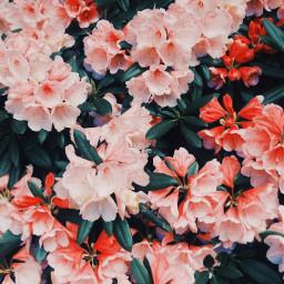 freetoedit aesthetic flowerpower hopeyoulikeit