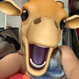 giraffe animoji hotday