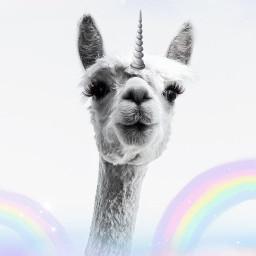 blissfulpoms pastel rainbow unicorn galaxymagiceffect freetoedit