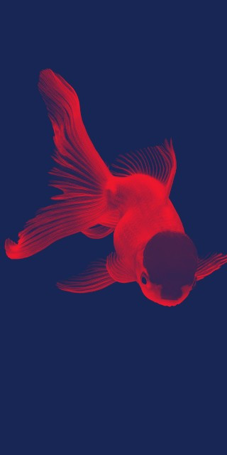 #freetoedit #Retro #RetroGoldFish #Goldfish #FanFish #FanGoldFish