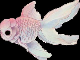 pinkfish fish freetoedit