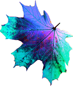 freetoedit leaf purple blue popular
