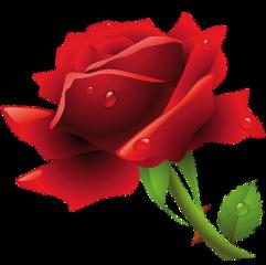 ftestickers love red rose flower freetoedit