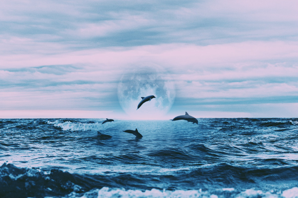 #freetoedit #myedit #myeditedphoto #beach #ocean #beauty #aesthetic #pretty #picsart #picsartphoto #perfect #dreamy #night #art