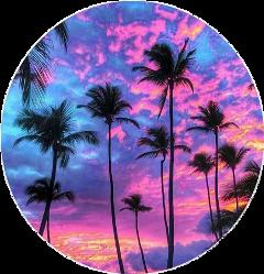 palms palm sunset tropic tropical freetoedit