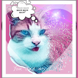 galaxy cat finley meow freetoedit