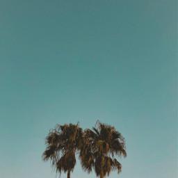 freetoedit palmtrees summer art nature