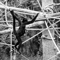 primate monkey portraitphotography portrait portraiture
