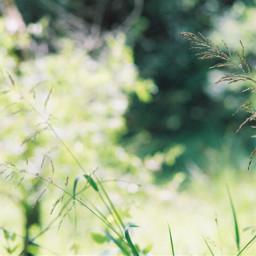 freetoedit green filmphotography