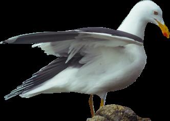 freetoedit freetoremix birdsphotography bird aves