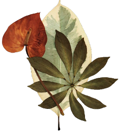 leaf freetoedit