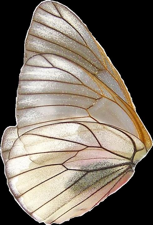 #freetoedit #magic #wonderland #fantasy #wings #fairy #sparkle #aesthetic #woods