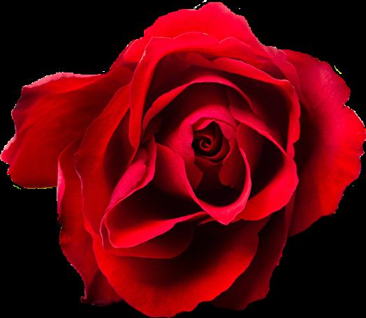 #cuorelucymy #Lucymy #mialu #rose #rosa #rosalucymy #red