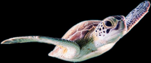 #seaturtle #freestickers #freetoedit #turtle