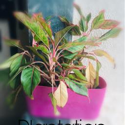 plants plantations nature greens