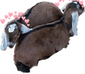 goats freetoedit