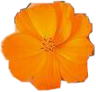 #orange #png #aesthetic #flower #polyvore #freetoedit