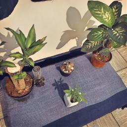 interesting plants marihuana brazil elegant
