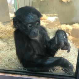 monkey wilhelma