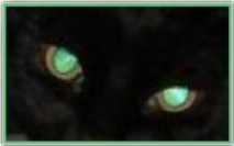 cool cat cateyes eyes green freetoedit
