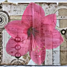 freetoedit pink flower scrapbook page