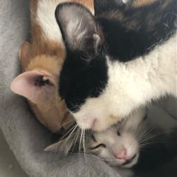 catsbabies catmother mutter kinder katzenbaby
