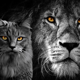irckittylove freetoedit cat lion coloursplash