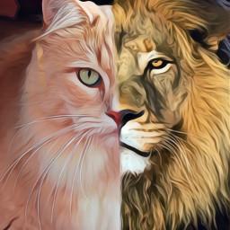 irckittylove kittylove freetoedit lion split