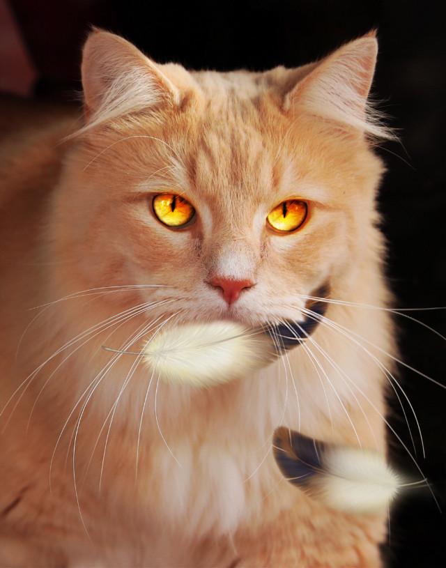 #caughtintheact #cat #feathers #madewithpicsart #beautytools #friendstickers #freetoedit