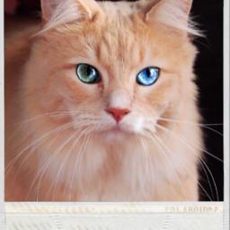 irckittylove kittylove cat compitition polaroid freetoedit