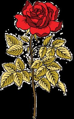 flor flower rojo red rosa freetoedit