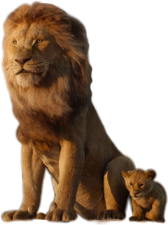 lion king baby lionking animal freetoedit sckingofthejungle