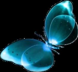 turquoise butterfly moth shiny beautiful freetoedit