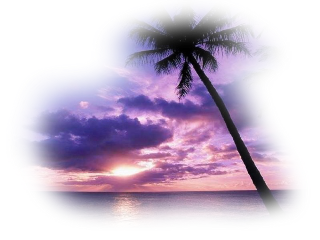 background freebackground freetoedit seascape palmtree