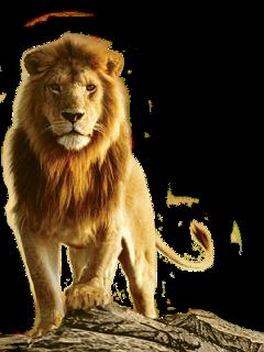 freetoedit sckingofthejungle kingofthejungle lion king