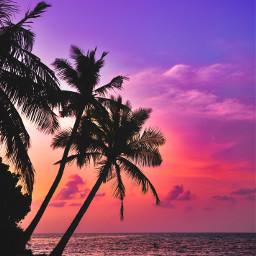 palmtree sunset sky background backgrounds freetoedit