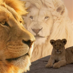 freetoedit challenge lion