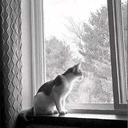 cat pet animals window curtains