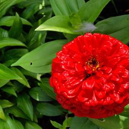 feather brightcolor velvety flower redflower freetoedit