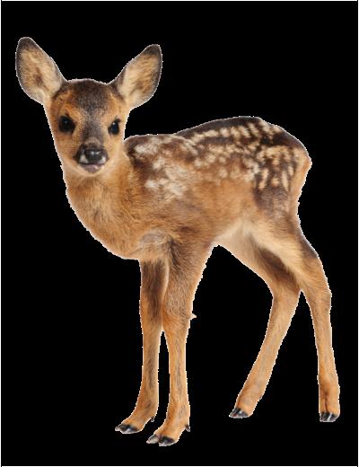 #deer #fawn #babydeer #babyfawn #cottagecore #freetoedit