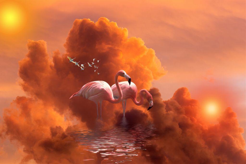 #flamingo sun set (TWO SUNS) #freetoedit