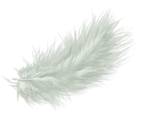 feather feathers white whitefeather ftestickers freetoedit