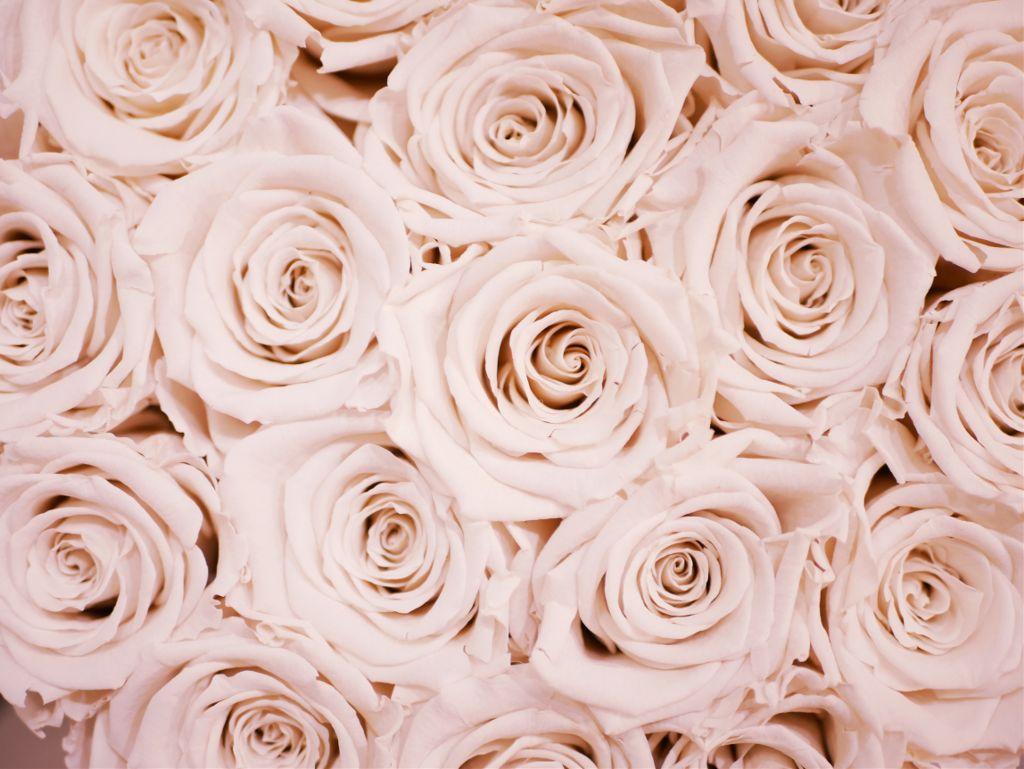 Remix your imagination into this image! Unsplash (Public Domain) #roses #flowers #background #backgrounds #freetoedit