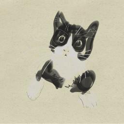 colorpaint draw cat funny portrait