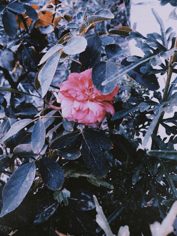 #photography #myclick #flower 🌺