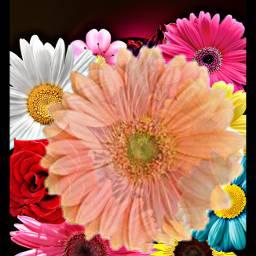 freetoedit flowers remixed